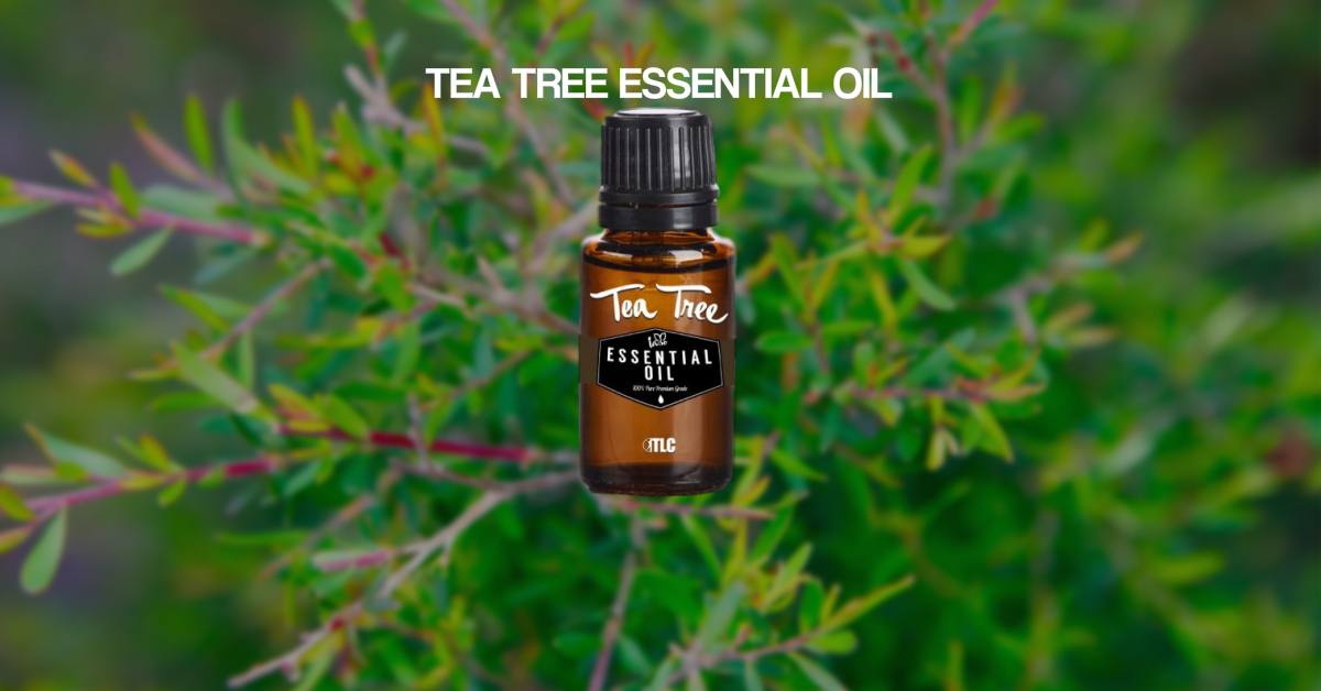 Tea Tree Feature