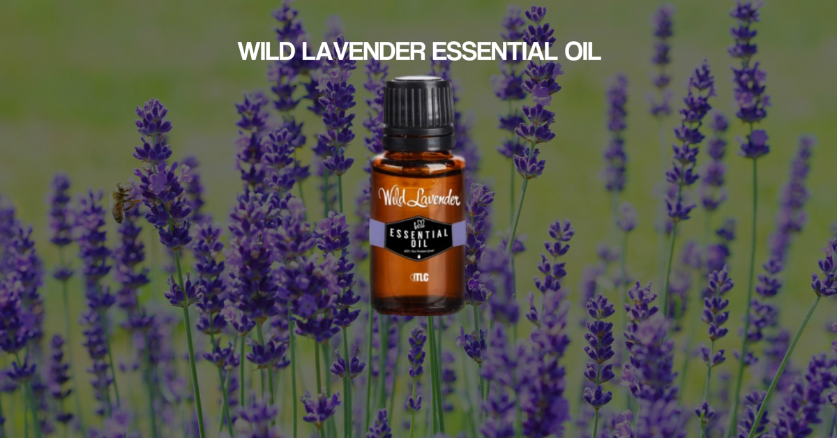 Wild Lavender Feature Image